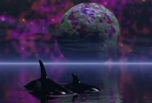 Starseeds - dolphins..